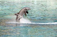 O salto do golfinho imagens de stock royalty free