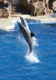 O salto dos golfinhos Fotos de Stock Royalty Free