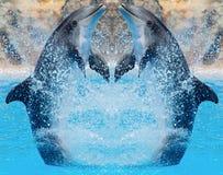 O salto dos golfinhos Fotos de Stock