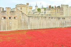 O sangue varreu terras e mares de papoilas vermelhas Imagens de Stock Royalty Free