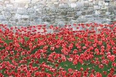 O sangue varreu terras e mares de papoilas vermelhas Foto de Stock Royalty Free