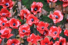 O sangue varreu terras e mares de papoilas vermelhas Imagem de Stock Royalty Free