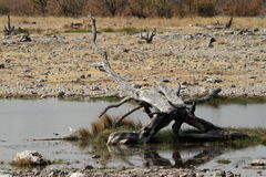 O savana no parque nacional de Etosha em Namíbia Foto de Stock