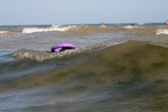 O Schnauzer gigante nada com um extrator na linha da ressaca nas ondas no mar imagem de stock