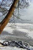 O Seascape com árvore só e a noite agradável iluminam-se no tempo de inverno fotografia de stock royalty free