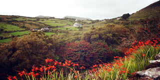 O Seascape com crocosmia alaranjado floresce no Kerry de Coutкy - foto do vintage Fotos de Stock