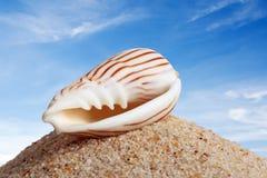 O Seashell isolou-se Imagens de Stock