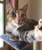 O selfie do gato ilumina a ação da câmera! Foto de Stock