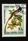O selo postal de URSS, série - Aves canoras, 1981 imagens de stock