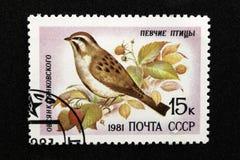 O selo postal de URSS, série - Aves canoras, 1981 imagem de stock royalty free