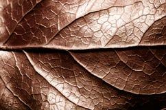 O sepia de Brown tonificou a foto macro extrema do close up da estrutura de superfície áspera seca da folha com a nervura central foto de stock