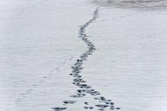 O ser humano segue e segue dos animais na neve em uma lagoa congelada nas montanhas fotografia de stock royalty free