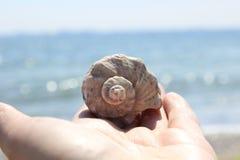 O shell de Rapan encontra-se na palma da menina Fotografia de Stock Royalty Free