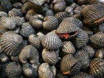 O shell do berbigão no mercado do marisco, Steamed descascou moluscos no mercado Foto de Stock