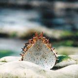 O shell do caranguejo olha acima do rockppol fotografia de stock