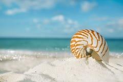 O shell do nautilus na areia branca da praia, contra o mar acena Fotos de Stock Royalty Free