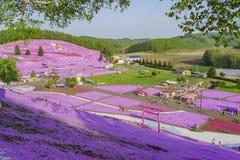 O Shiba bonito Sakura Fotos de Stock Royalty Free
