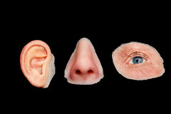 O silicone colorido artificial fez prótese faciais Foto de Stock Royalty Free