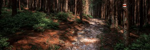 O sinal da fuga de caminhada marca pintado em uma árvore Calha principal do trajeto Forest National Park boêmio bonito trekking foto de stock royalty free