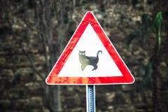 O sinal de estrada é cuidadoso o gato - perto da estrada transversaa Fotos de Stock Royalty Free