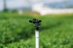O sistema de extinção de incêndios do close up na plantação de chá verde é molhar do sistema Fotos de Stock