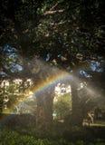O sistema de irrigação de uma árvore alinhou a rua em Durban Arica sul fotografia de stock