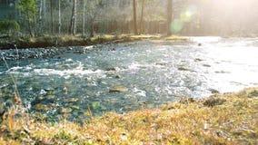 O slider da zorra disparou da água de espirro em um rio da montanha perto das rochas da floresta e dos raios molhados do sol Cons video estoque