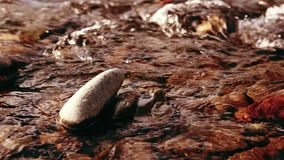 O slider da zorra disparou da água de espirro em um rio da montanha perto das rochas da floresta e dos raios molhados do sol Cons filme