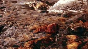 O slider da zorra disparou da água de espirro em um rio da montanha perto das rochas da floresta e dos raios molhados do sol Cons vídeos de arquivo