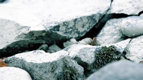 O slider da zorra disparou da ?gua de espirro em um rio da montanha perto das rochas da floresta e dos raios molhados do sol Cons vídeos de arquivo
