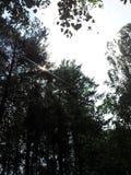 O sol é atrás das árvores fotografia de stock royalty free