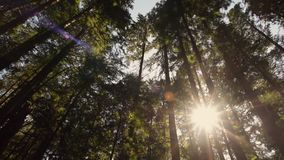 O sol branco brilhante brilha através das árvores na floresta vídeos de arquivo