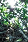 O sol brilha através da selva Imagem de Stock
