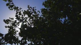 O sol brilha através das árvores filme