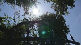 O sol brilha através das árvores video estoque