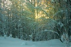 O sol brilha através das árvores cobertos de neve na floresta Fotos de Stock