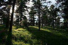 O sol brilha entre os pinhos nas montanhas de rochoso fotos de stock