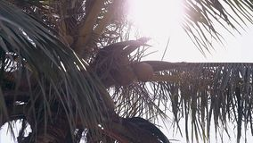 O sol brilhante brilha através do tiro enorme do baixo ângulo das folhas de palmeira vídeos de arquivo