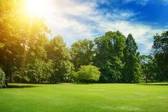 O sol brilhante do verão ilumina árvores e a grama cobertas parque Imagem de Stock