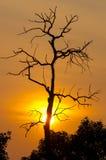 O sol brilhava Echaa Imagens de Stock