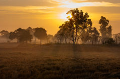 O sol da manhã era meu Imagens de Stock Royalty Free