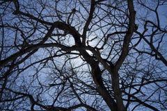 O sol da mola quebra através dos ramos de uma árvore Imagem de Stock Royalty Free