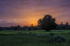 O sol da noite Fotografia de Stock