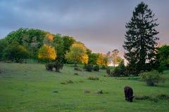 O sol da noite no jydelejet, moen, danmark Foto de Stock
