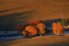 O sol de ajuste Fotos de Stock Royalty Free