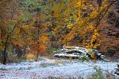 O sol destaca as cores do outono Fotos de Stock Royalty Free