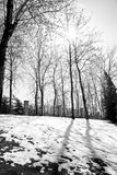 O sol do inverno Fotos de Stock