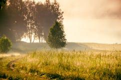 O sol levanta-se acima das nuvens do mar e do ouro floresta que esconde na n Trajeto de floresta fotografia de stock royalty free