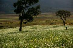 o sol na árvore e a mostarda colocam com a flor branca em DonDuong - Dalat- Vietname imagem de stock royalty free