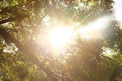 O sol nas árvores, o sol brilhante na folha imagens de stock